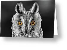 Long Eared Owl 2 Greeting Card