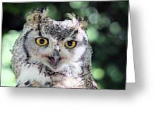 Long Eared Owl In The Trees Greeting Card
