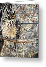 Long Eared Owl Resting Greeting Card