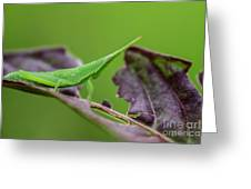 Long Grasshopper Greeting Card