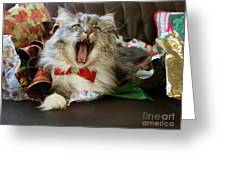 Long Haired Grey And White A Cat Yawns Amid Christmas Wrapping Paper Greeting Card