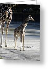 Long Legs - Giraffe Greeting Card