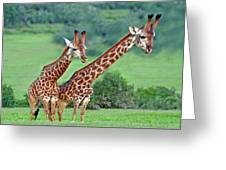 Long Necks Together Greeting Card