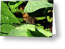 Long Tail Skipper Butterfly 1 Greeting Card