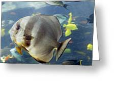 Longfin Batfish Greeting Card