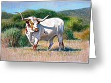 Longhorn Bull Greeting Card by Sue Halstenberg