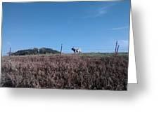 Longhorn In Kansas Greeting Card