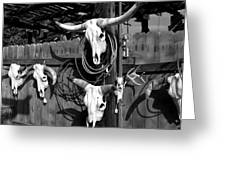 Longhorn Skulls Greeting Card