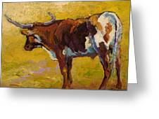 Longhorn Study Greeting Card