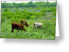 Longhorns - Grazing In The Wilds Greeting Card
