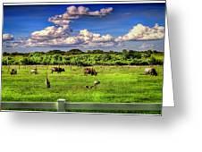 Longhorns At The Ranch Greeting Card