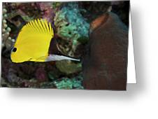 Longnose Butterflyfish Greeting Card by Steve Rosenberg - Printscapes