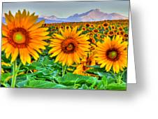 Longs Sunflowers Greeting Card
