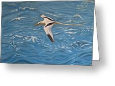 Longtail Over Water Greeting Card