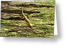Longtailed Salamander Greeting Card