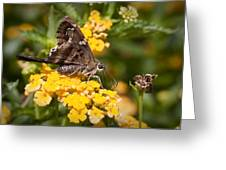 Longtailed Skipper Urbanus Proteus Greeting Card