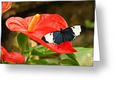 Longwing Greeting Card