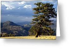 Lonly Tree Greeting Card