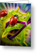 Look At The Colors Over There. Greeting Card