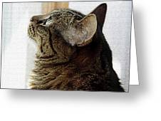 Look Out Window Tabby Cat Greeting Card