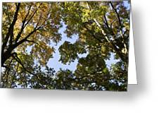 Look Up  Greeting Card