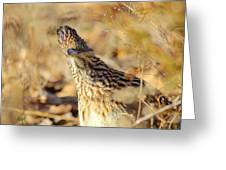 Looking A Little Cuckoo Greeting Card
