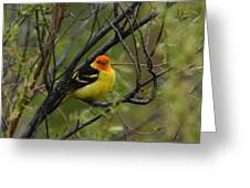 Looking At You - Western Tanager Greeting Card