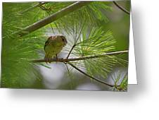 Looking Down - Common Sparrow - Passer Domesticus Greeting Card