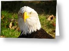 Looking Eagle Greeting Card