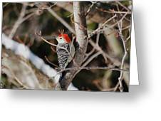 Looking For A Place To Peck Greeting Card