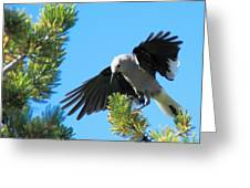 Looking For Lunch ... Montana Art Photo Greeting Card