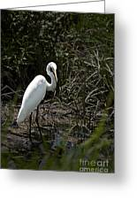 Looking For Lunch Greeting Card by Tamyra Ayles