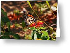 Looking For Nectar Greeting Card