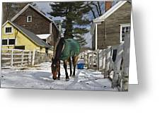 Looking For Stray Hay Greeting Card