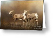 Looking For The Herd Greeting Card