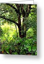 looking into the Jungle Greeting Card