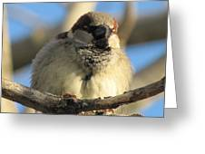 Looking Over The Nest Greeting Card
