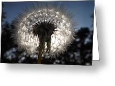Looking Through A Dandelion Greeting Card