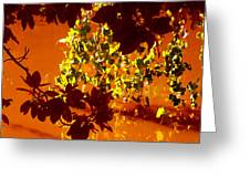 Looking Through Leaves Into Pond Greeting Card