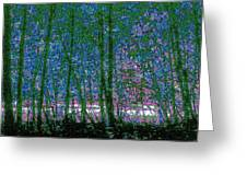 Looking Through The Trees Greeting Card