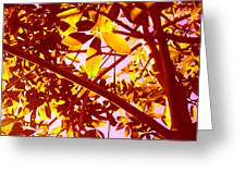 Looking Through Tree Leaves 2 Greeting Card