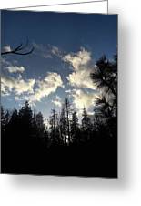 Looking To The Sky Greeting Card