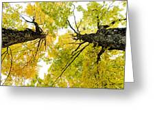 Looking Up At Fall Greeting Card