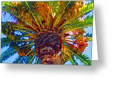 Looking Up At Palm Tree  Greeting Card