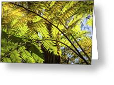 Looking Up To A Beautiful Sunglowing Fern In A Tropical Forest Greeting Card