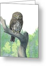 Lookout- Northern Pygmy-owl Greeting Card