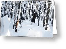 Lookout Trees Greeting Card