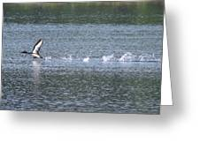 Loon Ascending... Greeting Card