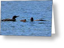 Loon Family Feeding Time Greeting Card