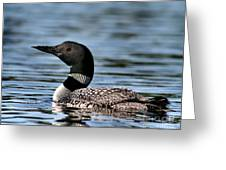 Loon In Blue Waters Greeting Card